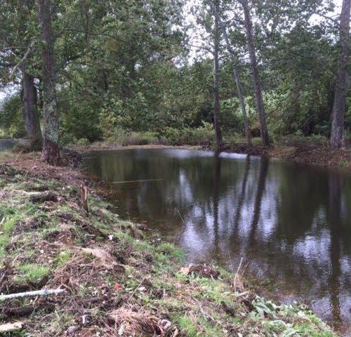 Meadow Branch farm full pond